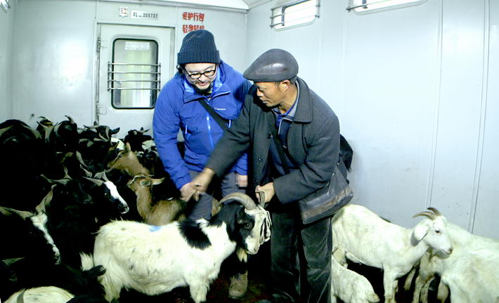 In the first episode of the documentary, Shanghai-based online writer Qi Dong (left) helps locals load cattle, sheep and dogs onto a train so that farmers can sell them in town.