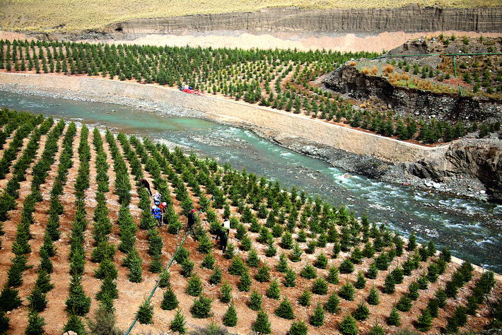 May 8, 2018: Workers plant spruces in an ecological restoration zone in Sunan County, Gansu Province, in the Qilian Mountains National Nature Reserve. Since 2017, the Qilian Mountains region has steadily promoted ecological restoration, with early results having already been achieved.  VCG
