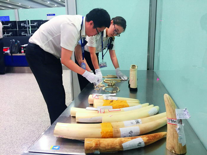 May 24, 2017: Officials from Beijing Customs check smuggled ivory.  VCG